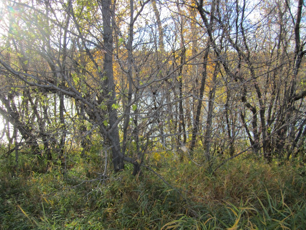 A view of the river through willows. Photo by Rebecca Lawton.
