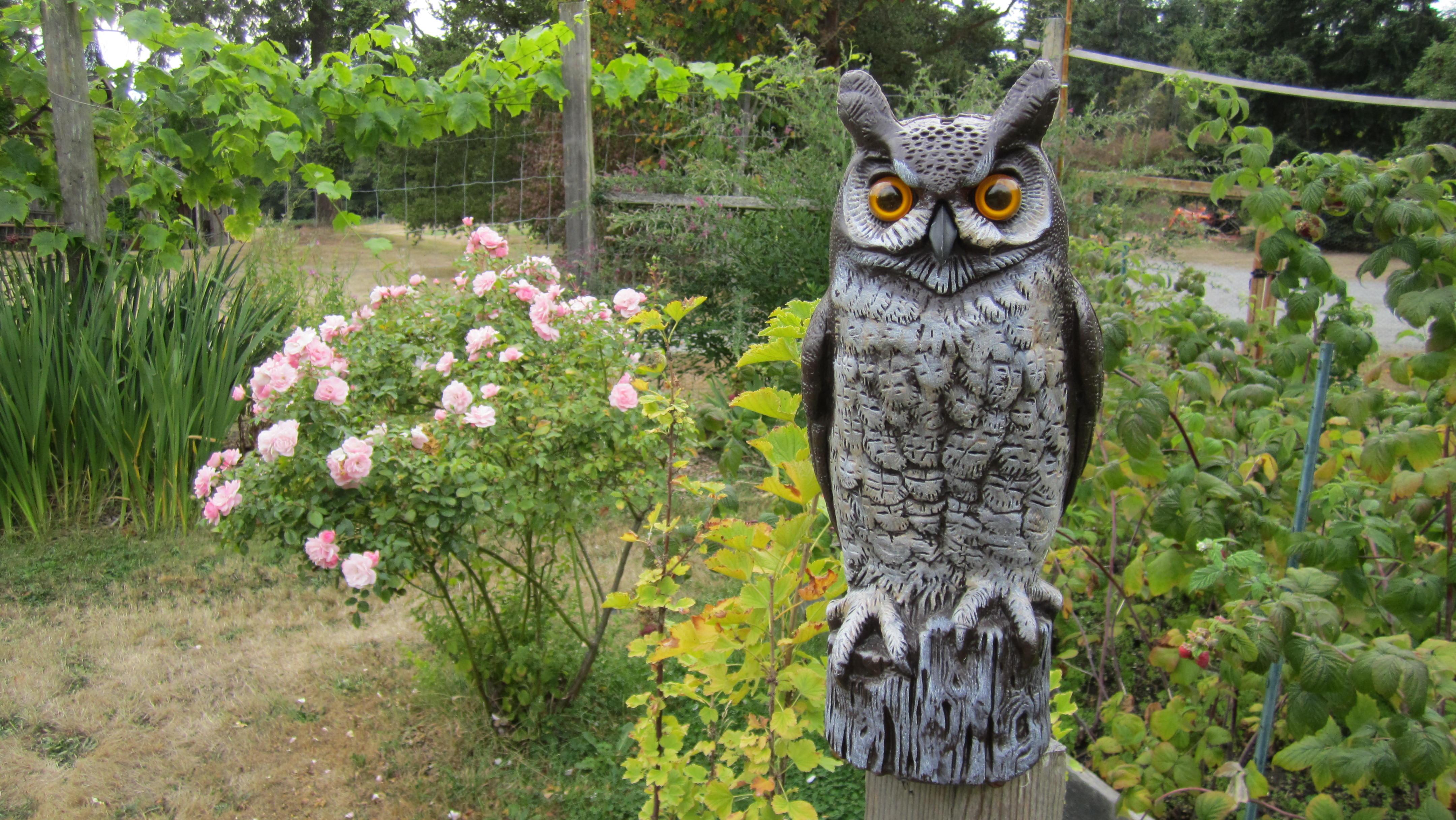 Awesome Easy Gardener 8001 Garden Defense Owl Walmart Com Spleencom